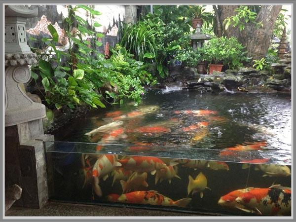 Kolam Ikan Minimalis Dengan Kaca - InfoAkuakultur.com