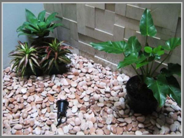 Taman Mini Kering Di Belakang Rumah